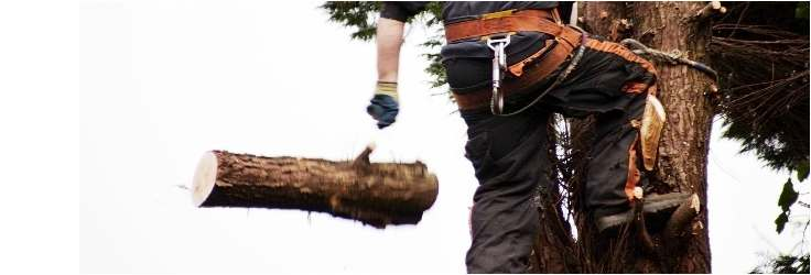Tree Pruning in Medway | Tree Pruning in Maidstone